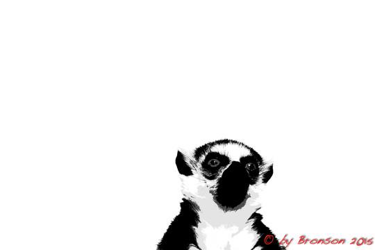 Lemur Head