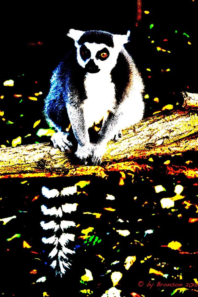 Lemur Observing