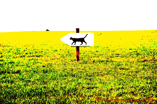 Pussy This Way