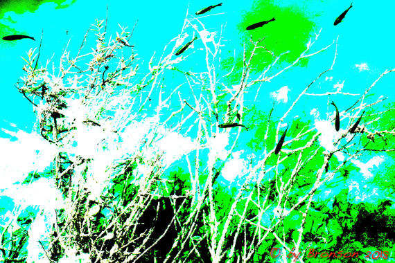 Fishes In The Tree 'Sc6'
