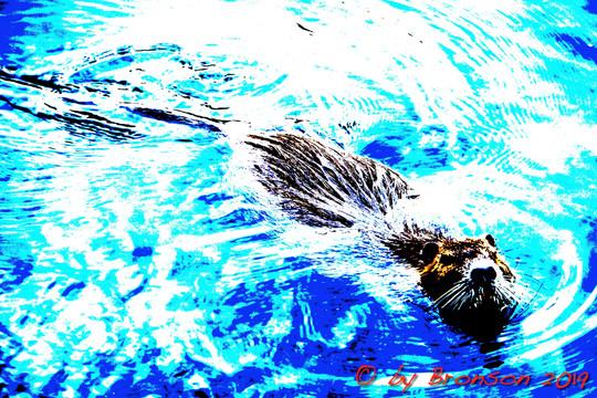 Floating Nutria 'Sc4'