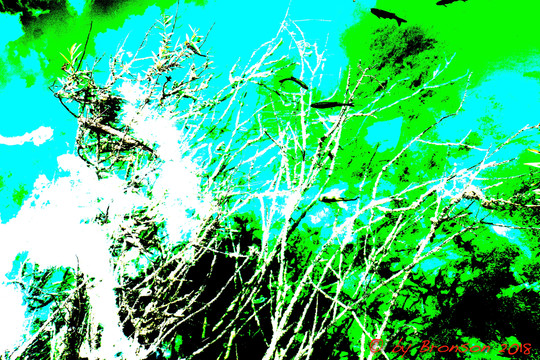 Fishes In The Tree 'Sc3'