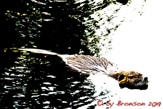 Floating Nutria 'Sc1'