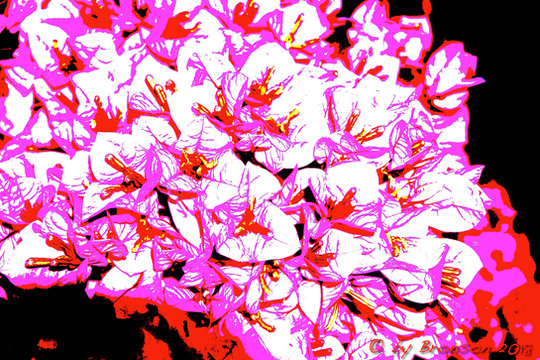 Pink Blossoms 'Sc1'