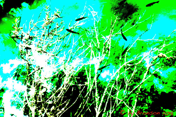 Fishes In The Tree 'Sc5'