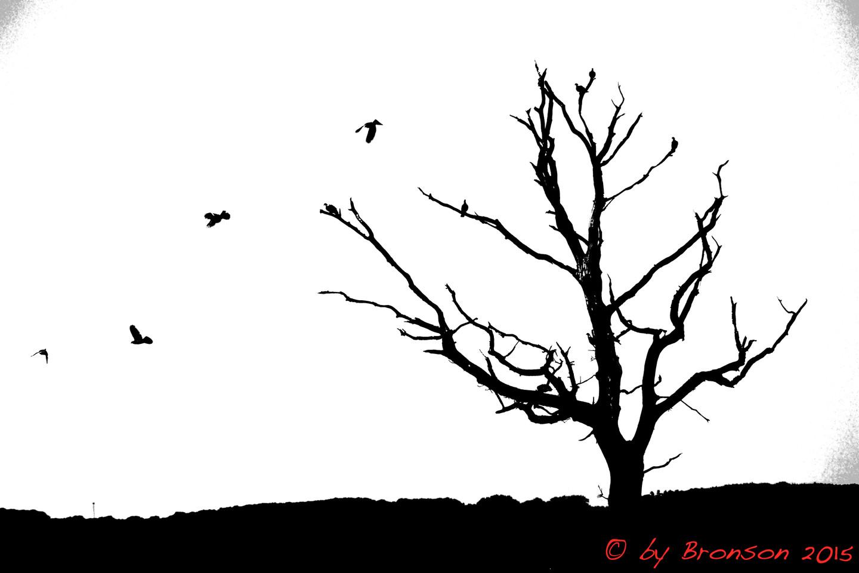 Taking Wings