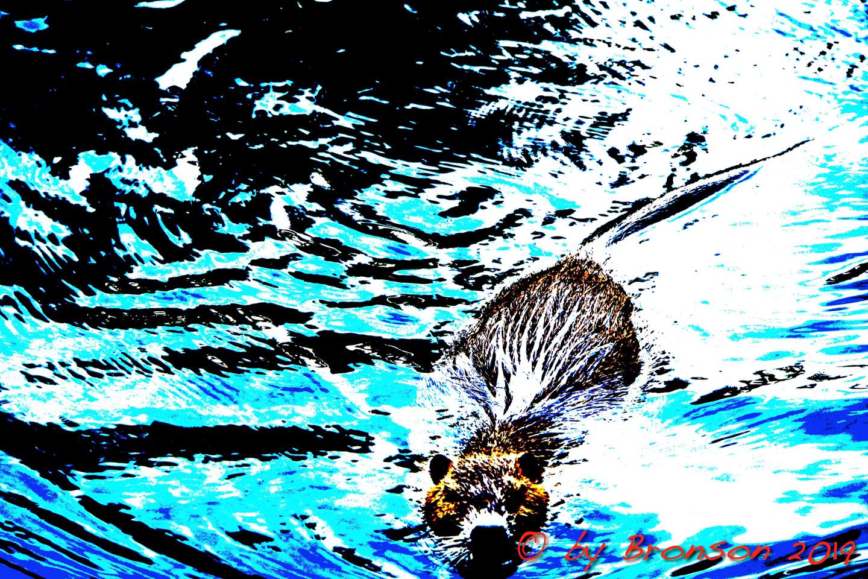 Floating Nutria 'Sc2'