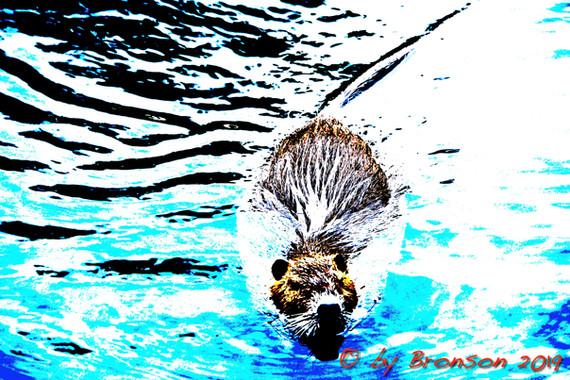 Floating Nutria 'Sc3'