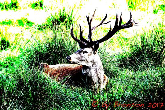 Do A Deer 'Per A'