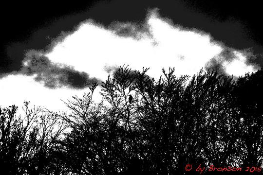 Dark Apprehension