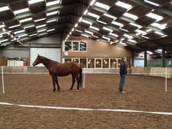 Spiegelen met paarden