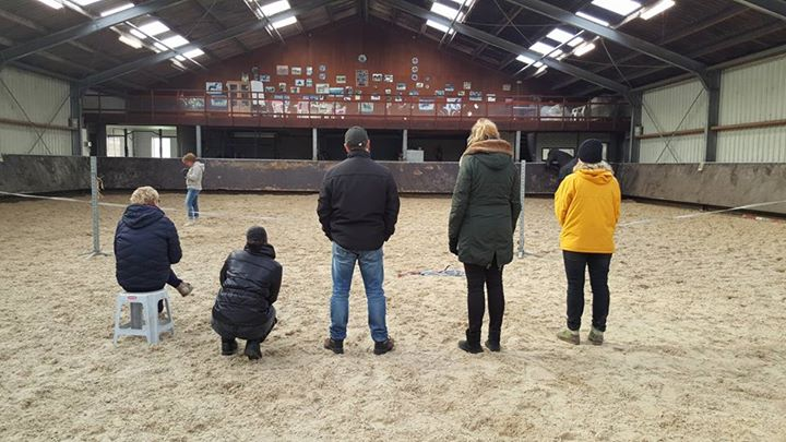 Mindfulness Training met Paarden