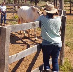 Paardencoaching Ibiza