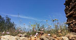 Natuurcoaching, Stiltewandeling, EQ ontwikkeling, Leiderschap, Ibiza