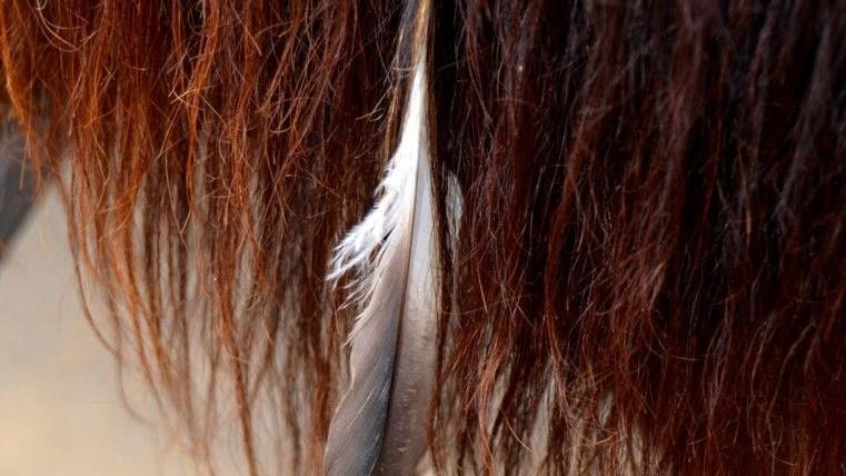 Naar een dieper bewustzijn met Paarden