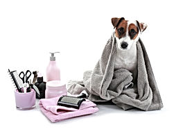 Cute dog with set for grooming on white