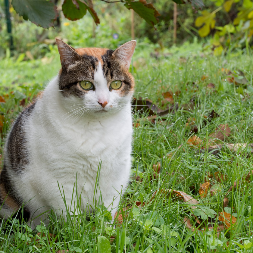 An obese cat