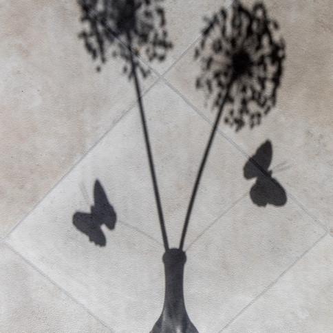 Butterflies and alliums