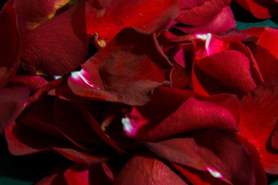 Rosa Revolution