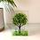 Thumbnail: Large Green Tree Tealight Holder
