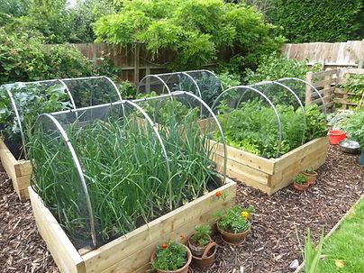 Home grown food Bristol organic gardening
