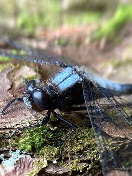 !Dragonfly.JPEG