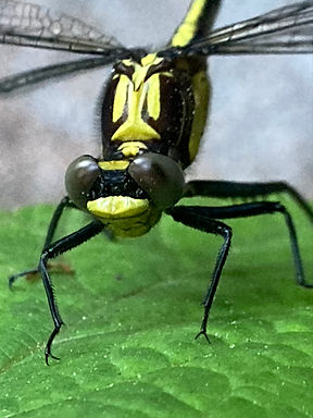 !Dragonfly-2.JPEG
