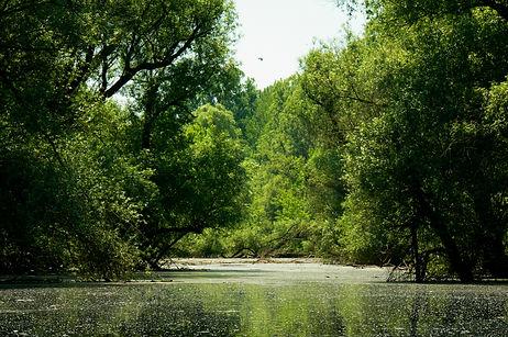 Gemenci-erdő nyitókép