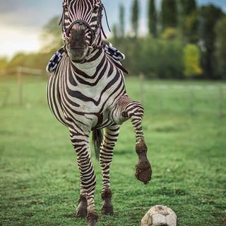 A focista