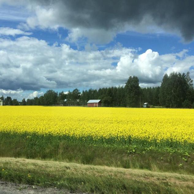 Dél-Finnország