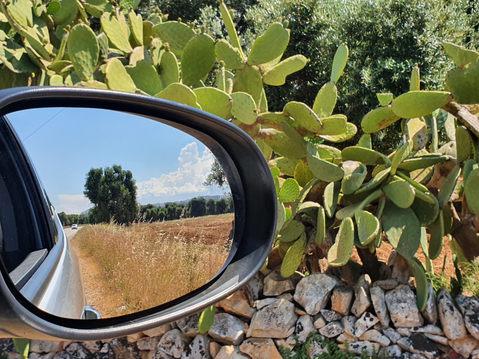 Olívaültetvény - háttérben Ceglie Messapica