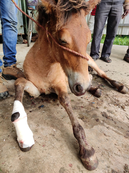 Medical Care for Retired Racehorse Offspring