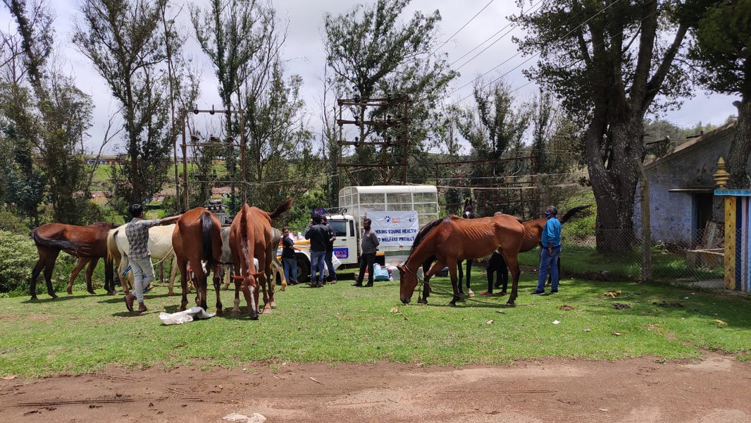 Horse Camp Medical Care By Worldwide Veterinary Services