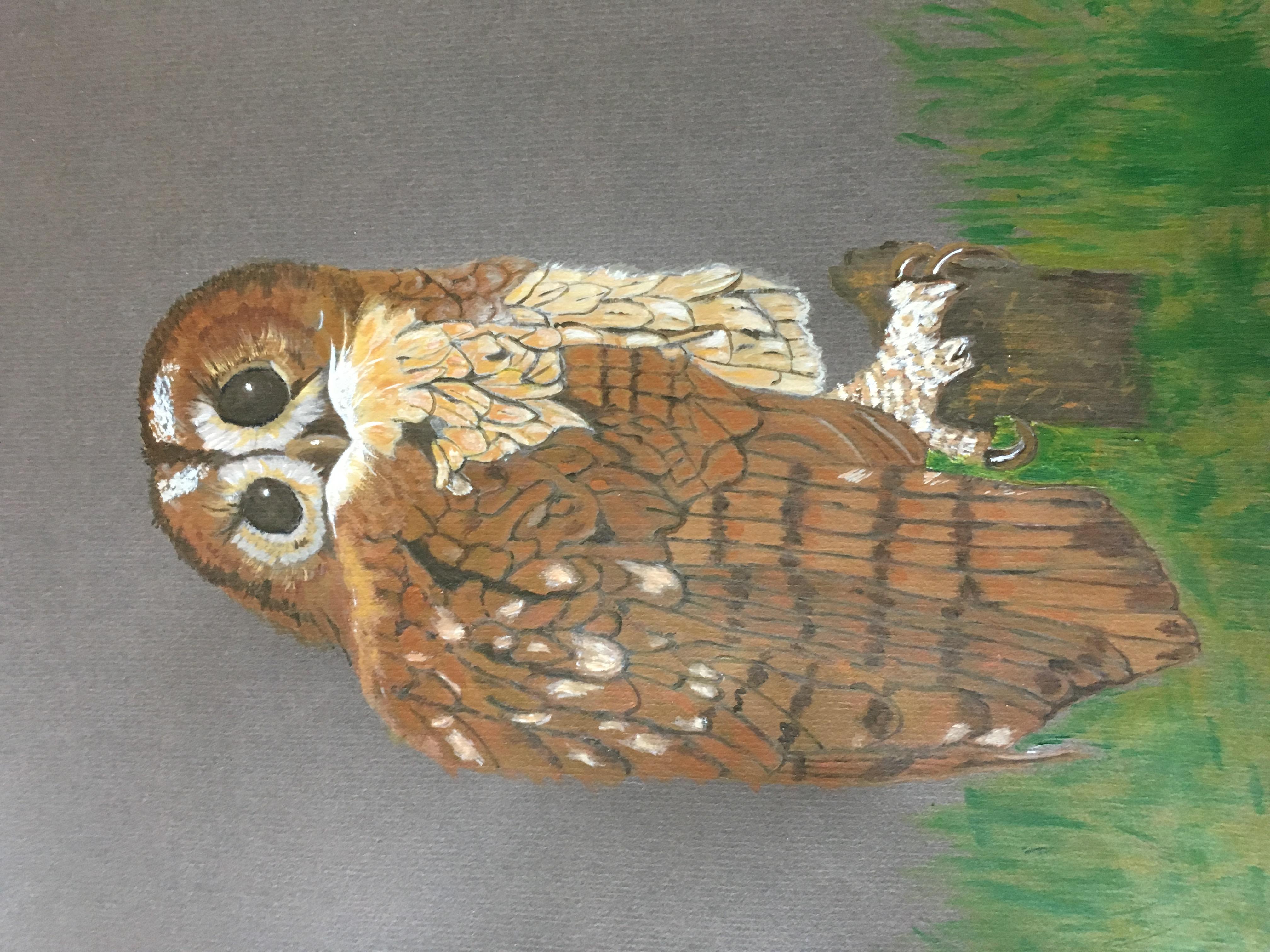 Sandra Curl - Tawny Owl
