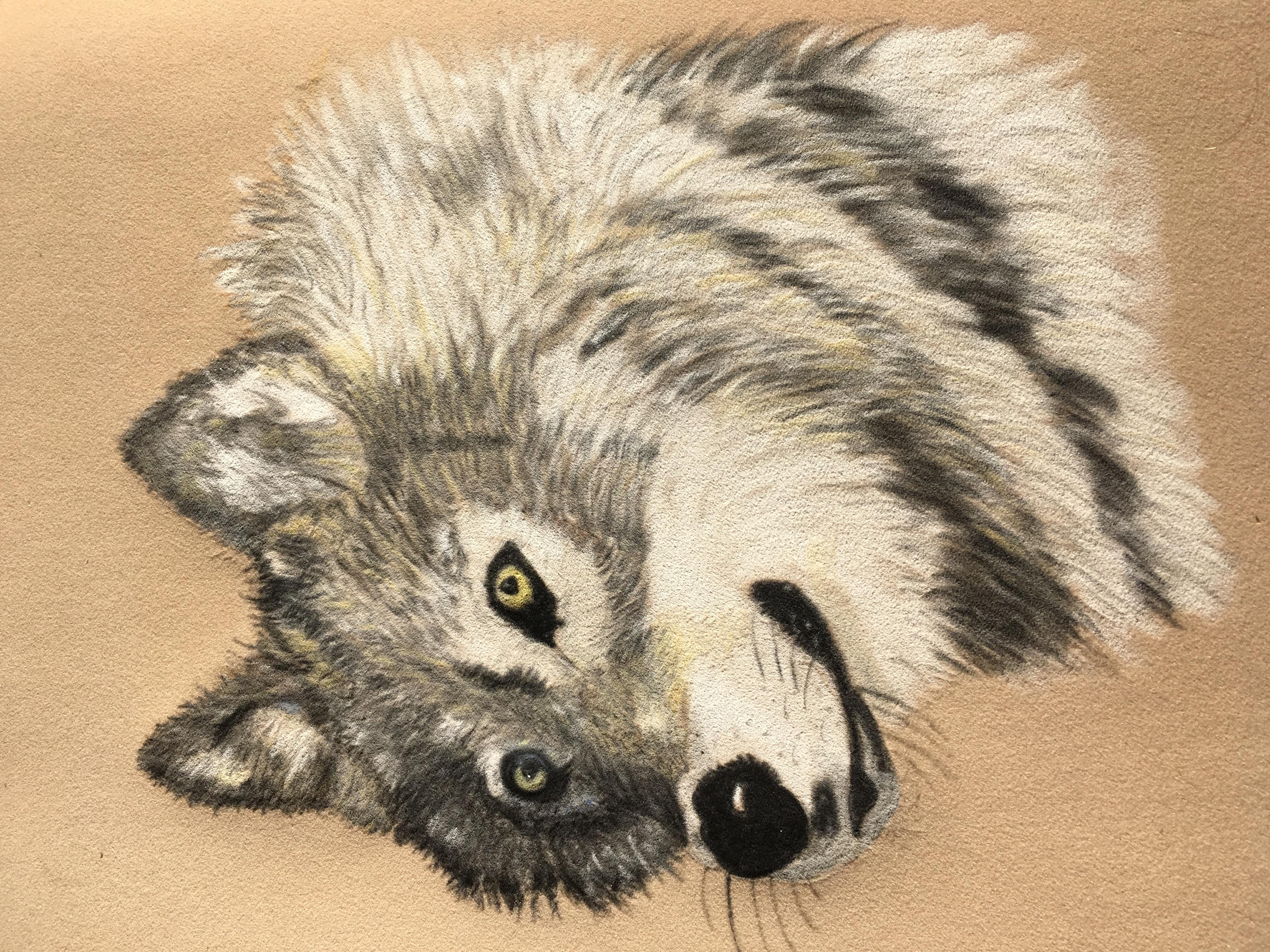 Sandra Curl - Alaskan Wolf