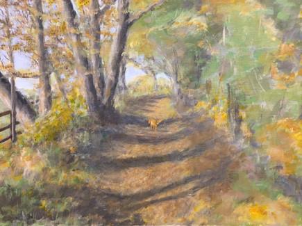 Autumn dog walk, Snelsmore