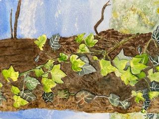 Carol Brindley - Ivy on Tree