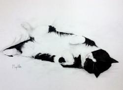 Murtle by Nandita Hoyes