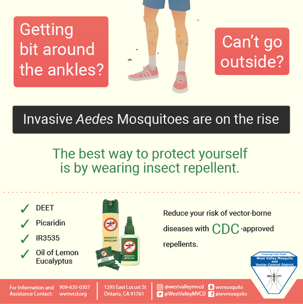 Aedes Graphic 1-01.png