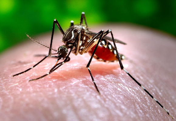 16743-close-up-of-a-mosquito-feeding-on-