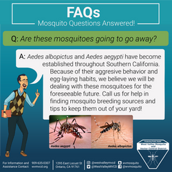 Invasive mosquitoes
