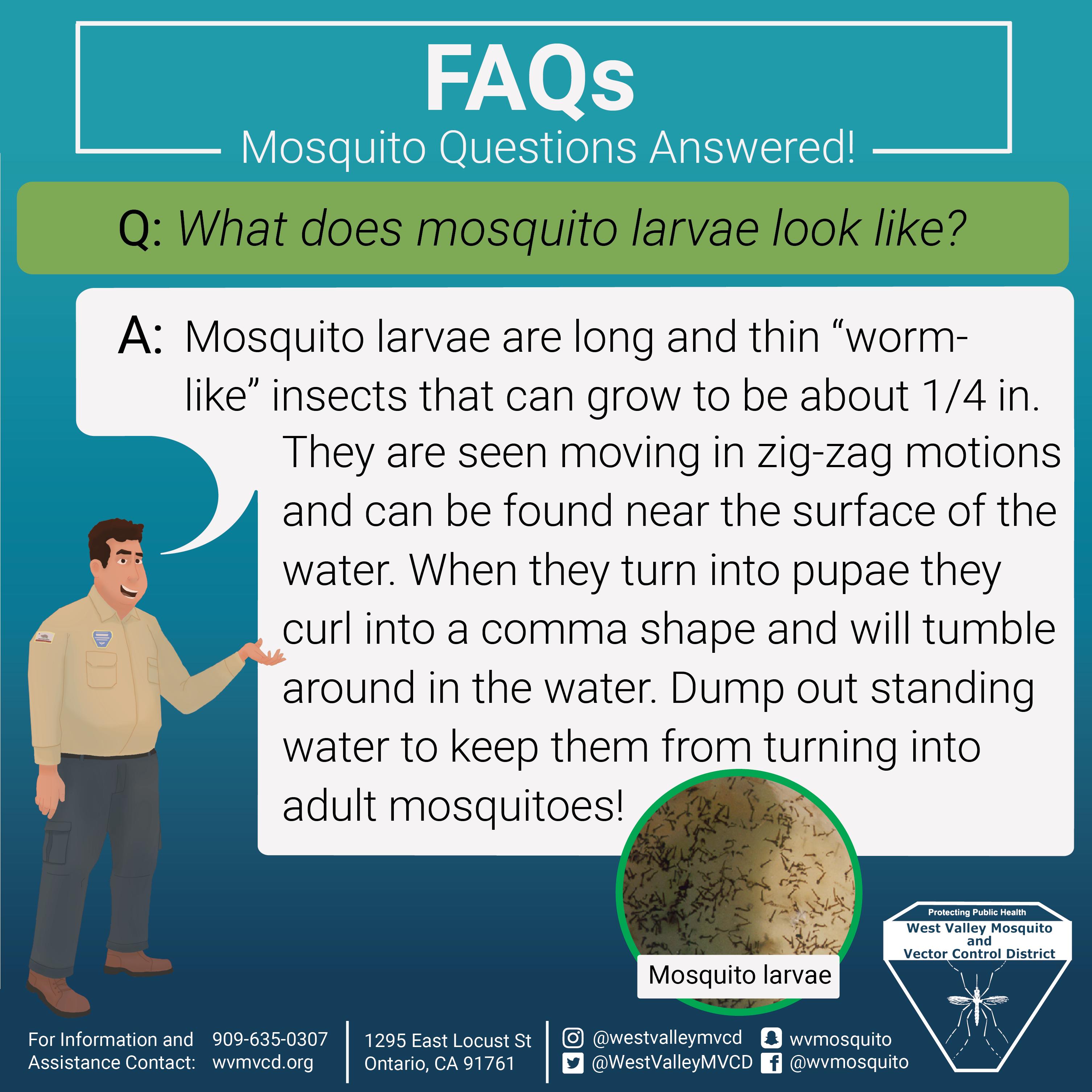 Larvae FAQ