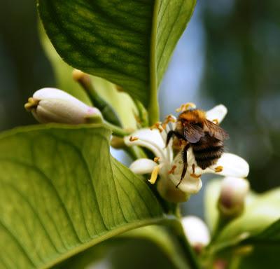 BEE WILD!