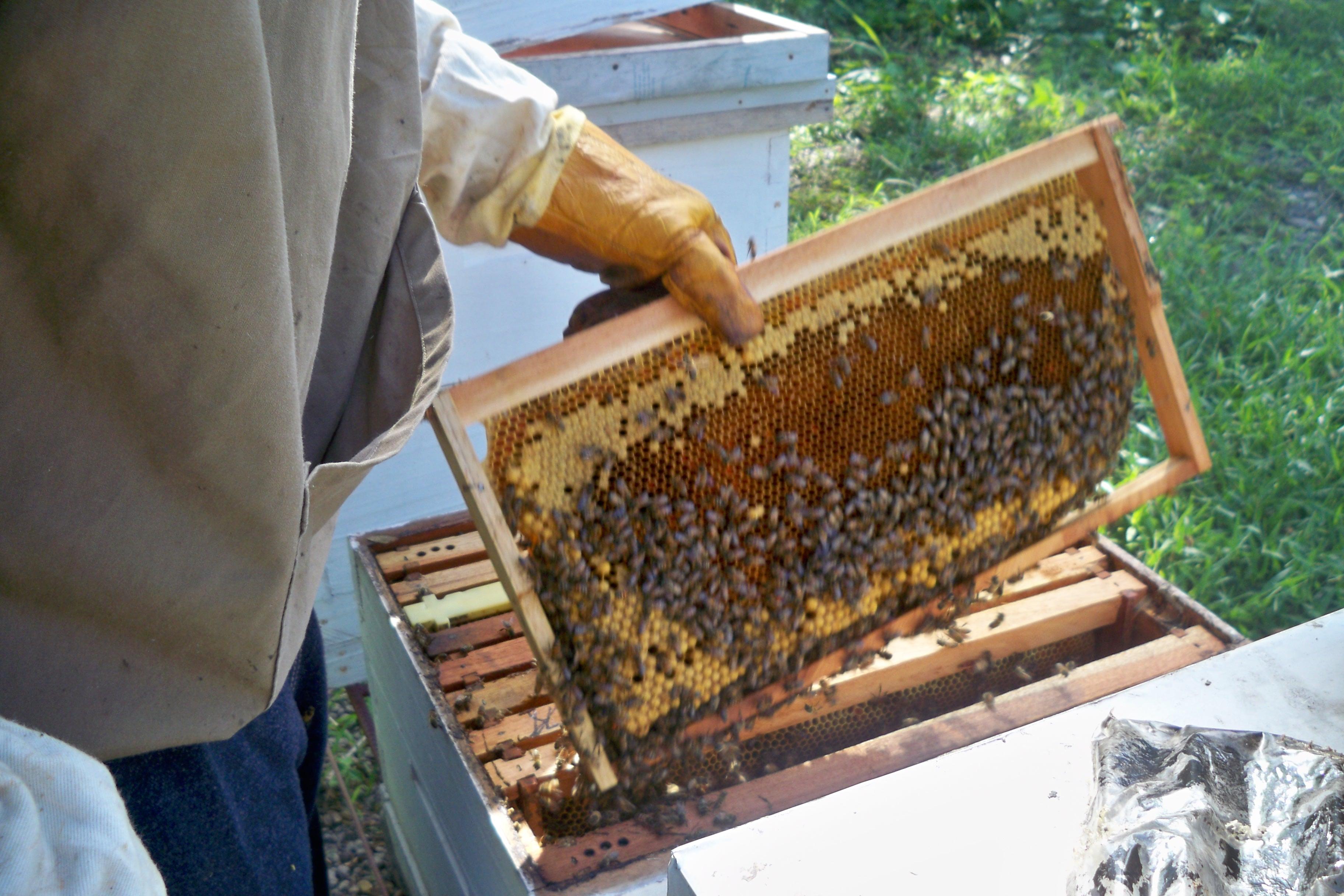 BEE VALUED!