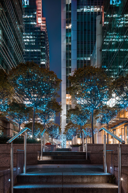 Canary Wharf at Night Colorful Trees