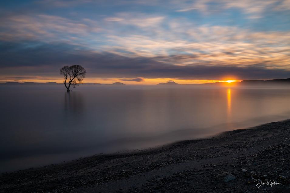 Sunset Taupo Tree