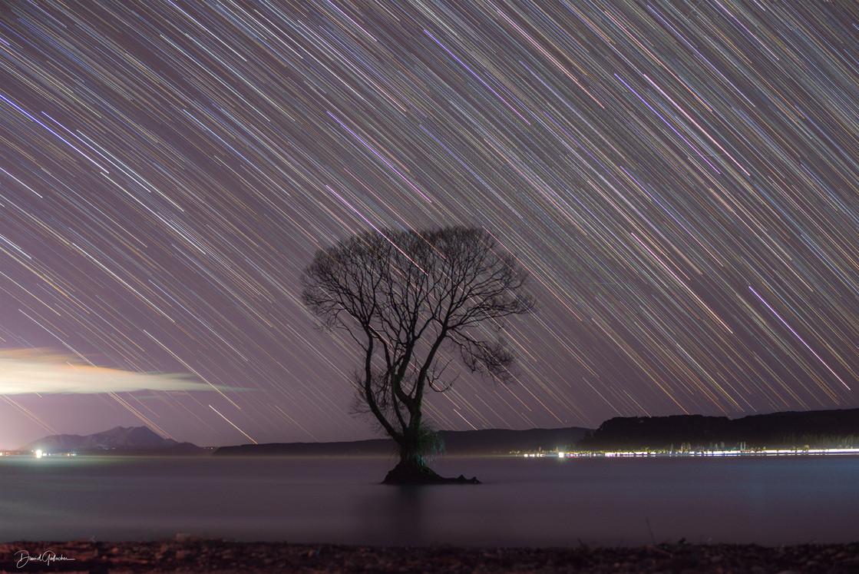 Star trail Taupo Tree