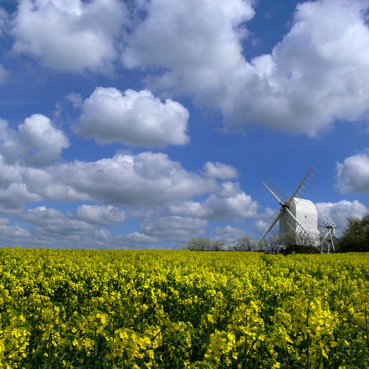 Windmill and rape field