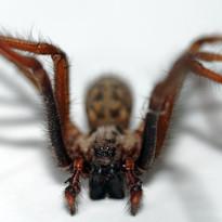 Sink spider