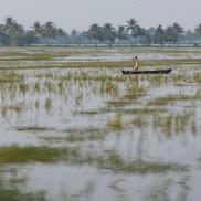 Kerala backwater fisherman